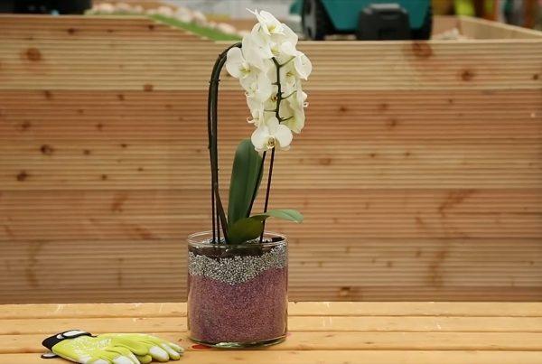 diy orchidea átültetés