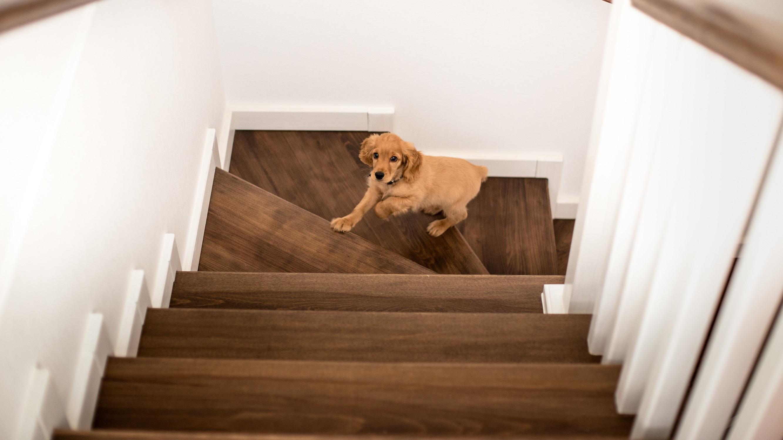 Lépcsőfelújítás egyszerűen, 100.000 mesterünk segítségével